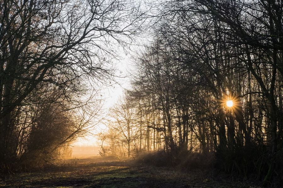 January sunrise, 179 kb